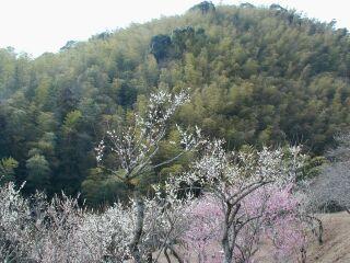 fukuoka1_11.jpg