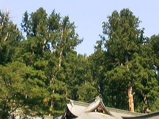 二荒山神社-杉1