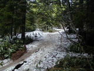 尾瀬沼南岸の雪道