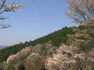 青空と山と桜1