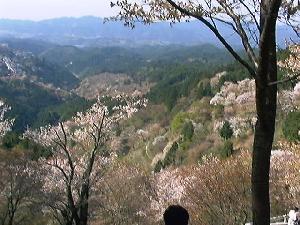 青空と山と桜2